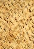 Peau d'oignon Photo libre de droits