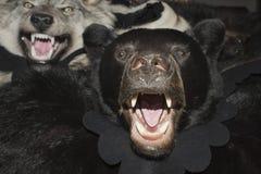 Peau d'ours noir photographie stock