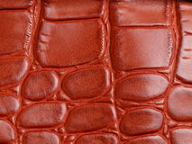 Crocodile de texture de peau Photos libres de droits