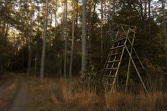 Peau de chasseurs au milieu du forrest photos libres de droits