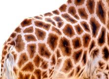 Peau de giraffe Image stock
