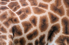 Peau de giraffe Photo stock