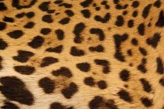 Peau de Jaguar Images libres de droits