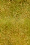 Peau de kiwi | Texture Photographie stock libre de droits