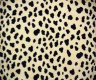 Peau de léopard Photo libre de droits
