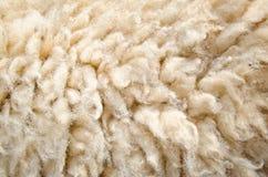 Peau de laine de moutons Photo libre de droits