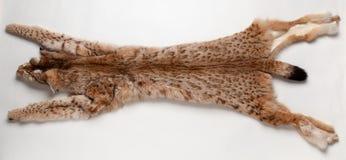Peau de Lynx Photographie stock