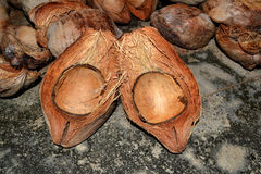 Peau de noix de coco photo libre de droits