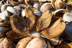 Peau de noix de coco Image stock
