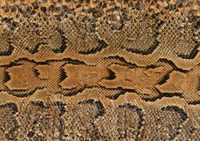 Peau de serpent Photos libres de droits