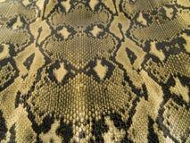 Peau de serpent Photographie stock libre de droits