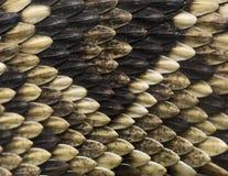 Peau de serpent Images libres de droits