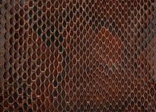 Peau de serpent Image stock