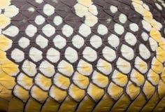Peau de serpent de vipère de mine de plan rapproché Photographie stock libre de droits