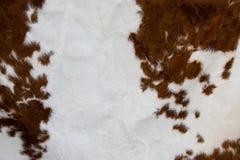 Peau de vache Photo stock