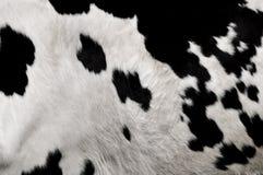 Peau de vache réelle Photographie stock libre de droits