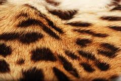 Peau du léopard Photographie stock libre de droits