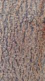 Peau en bois de tronc Photographie stock libre de droits