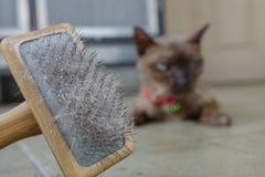 Peau et cheveux de chat sur la brosse après le toilettage Photographie stock libre de droits