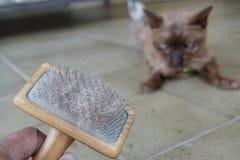 Peau et cheveux de chat sur la brosse après le toilettage Photo stock