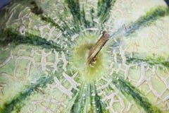 Peau et tige d'un melon Images stock