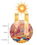 Peau non protégée sans lotion de protection solaire Photo stock