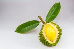 Peau ouverte de durian d'isolement sur le fond blanc Images libres de droits