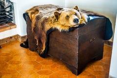 Peau principale de fourrure d'ours photographie stock
