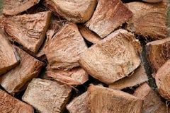 Peau sèche de noix de coco Photographie stock libre de droits