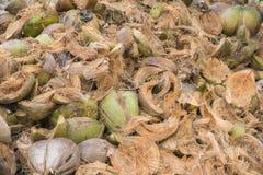 Peau verte de noix de coco de beaucoup de morceaux il cru Images stock
