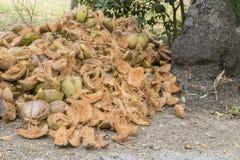 Peau verte de noix de coco de beaucoup de morceaux sous la base de la noix de coco Photos stock
