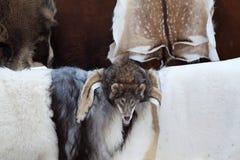 Peaux de fourrure d'animal sauvage, tête de loup au marché de métier Images libres de droits