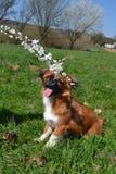 Pebaby doggo