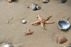 Pebbels och seastar på strandsand Arkivfoto