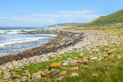 Pebble海滩南非 库存照片