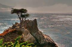 Pebble Beach孤立结构树 免版税图库摄影