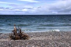 Pebble Beach con las ondas y la madera de deriva Imágenes de archivo libres de regalías
