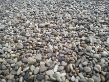 Pebble beach with green pebble in the middle Stock Photography
