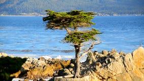 Pebble Beach Monterey California almacen de metraje de vídeo