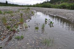 Pebble beach of the Northern  river Stock Image