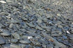 Pebble Beach preto imagens de stock royalty free