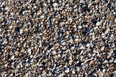 Pebble beach shell background to small texture view many sand white blue sun light royalty free stock images