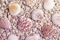 Pebble beach with shells background Stock Photos