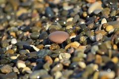 Pebble beach Royalty Free Stock Photo