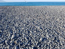 Pebble Beach y la gaviota fotografía de archivo