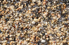 Pebble closeup on full frame. At sunset time Royalty Free Stock Photos