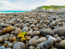 The pebble coast of English Channel Royalty Free Stock Images