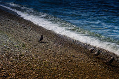 Pebble Covered Shoreline With Pigeons Royalty Free Stock Image