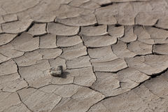 Pebble on Cracked Earth Royalty Free Stock Photo