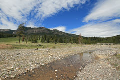 Pebble Creek under cumulus cirrus cloudscape in the Lamar Valley in Yellowstone National Park in Wyoming USA Royalty Free Stock Photos